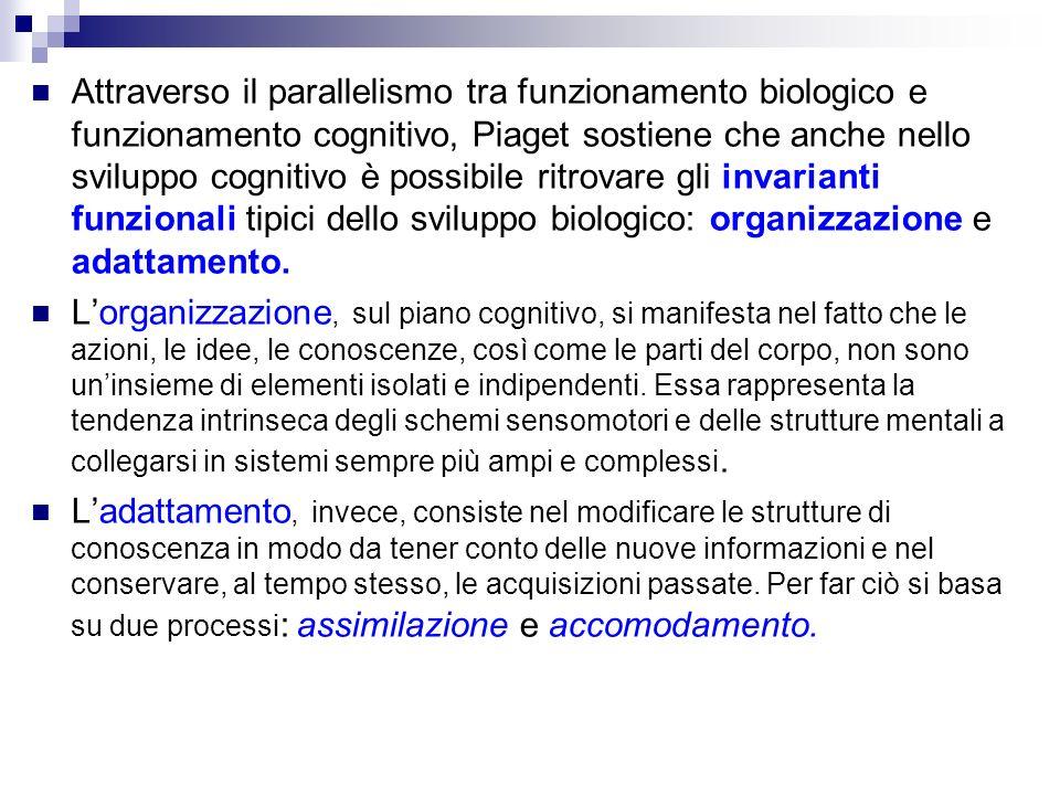 Attraverso il parallelismo tra funzionamento biologico e funzionamento cognitivo, Piaget sostiene che anche nello sviluppo cognitivo è possibile ritrovare gli invarianti funzionali tipici dello sviluppo biologico: organizzazione e adattamento.