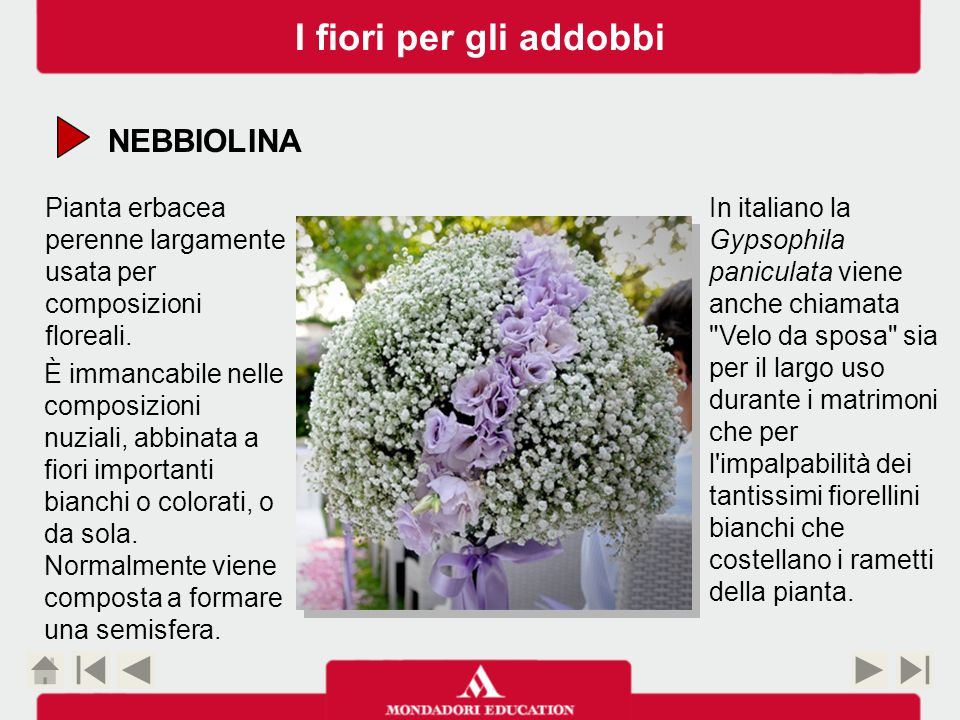 I fiori per gli addobbi NEBBIOLINA