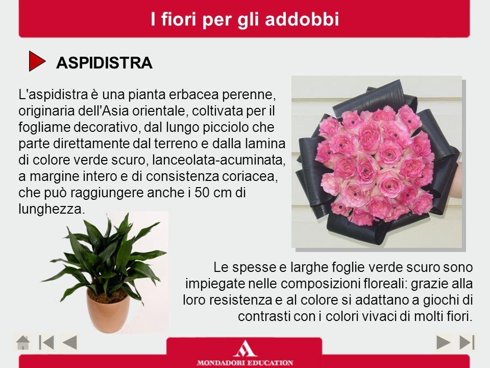 I fiori per gli addobbi ASPIDISTRA