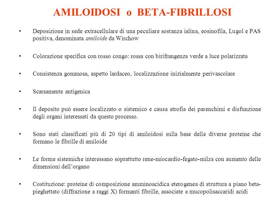 AMILOIDOSI o BETA-FIBRILLOSI