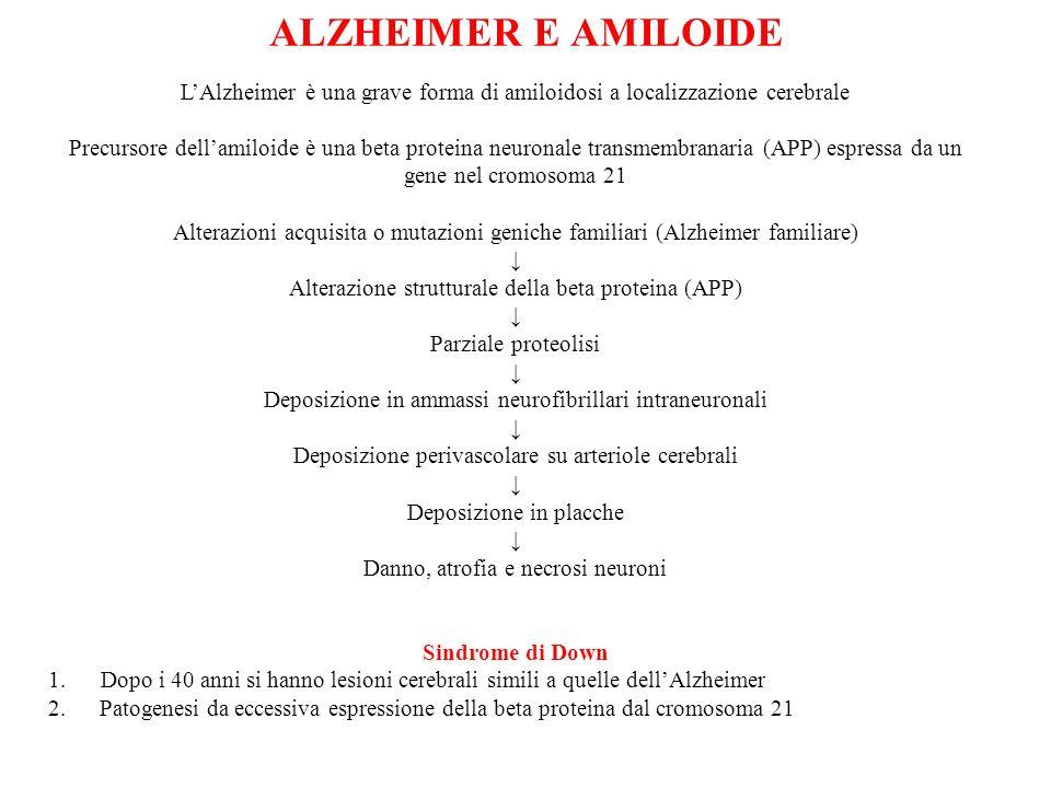 ALZHEIMER E AMILOIDE L'Alzheimer è una grave forma di amiloidosi a localizzazione cerebrale.