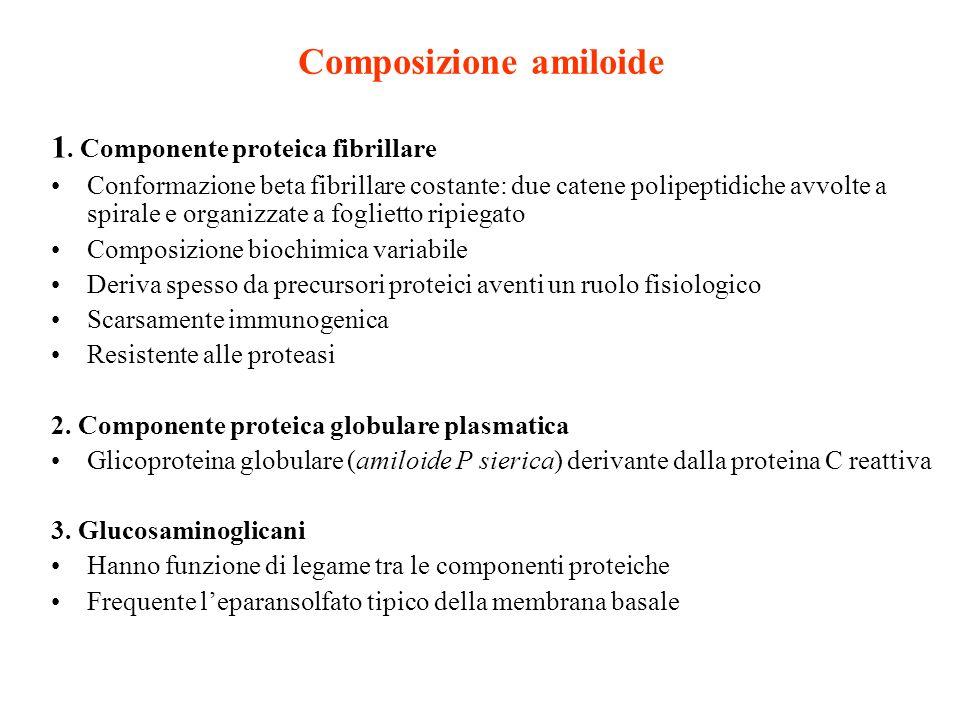Composizione amiloide