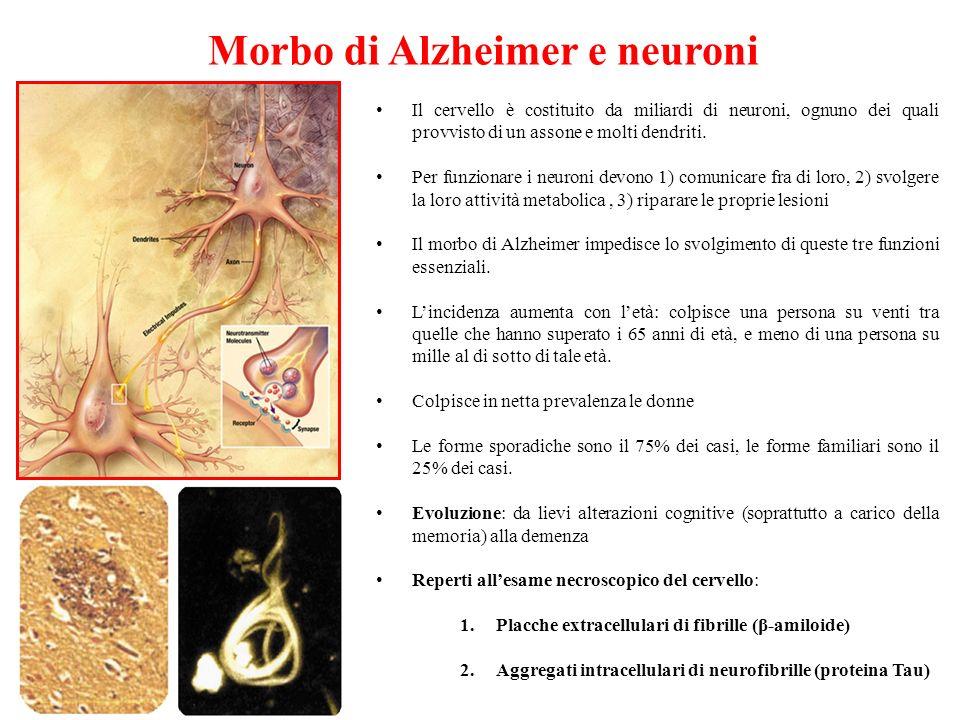 Morbo di Alzheimer e neuroni