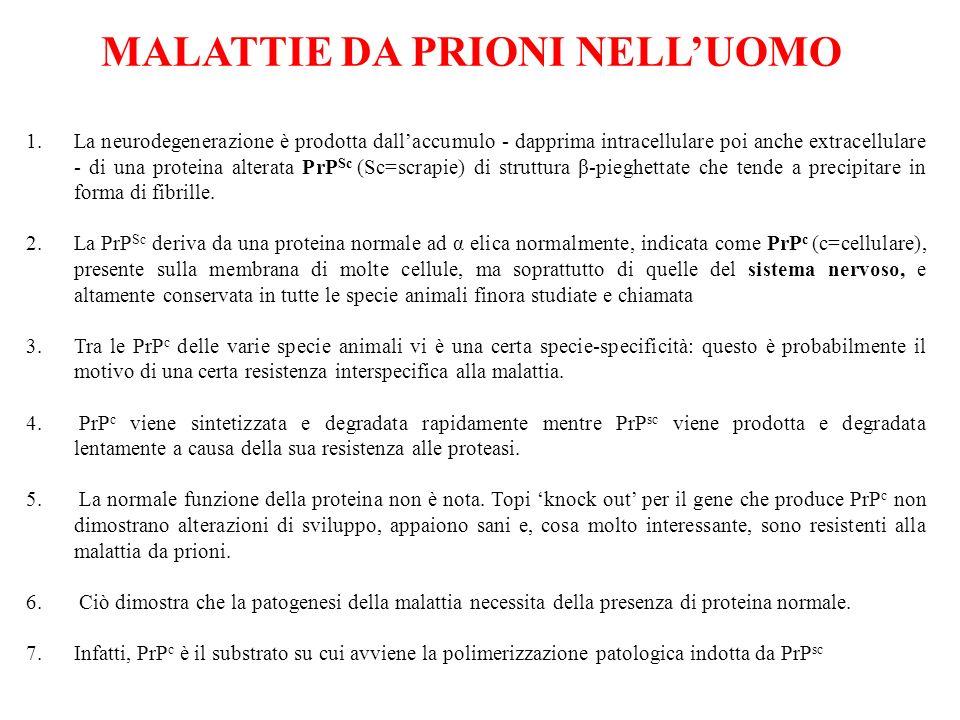 MALATTIE DA PRIONI NELL'UOMO