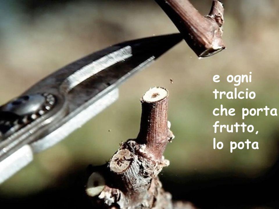 e ogni tralcio che porta frutto, lo pota