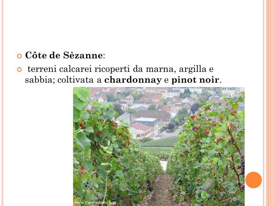 Côte de Sèzanne: terreni calcarei ricoperti da marna, argilla e sabbia; coltivata a chardonnay e pinot noir.
