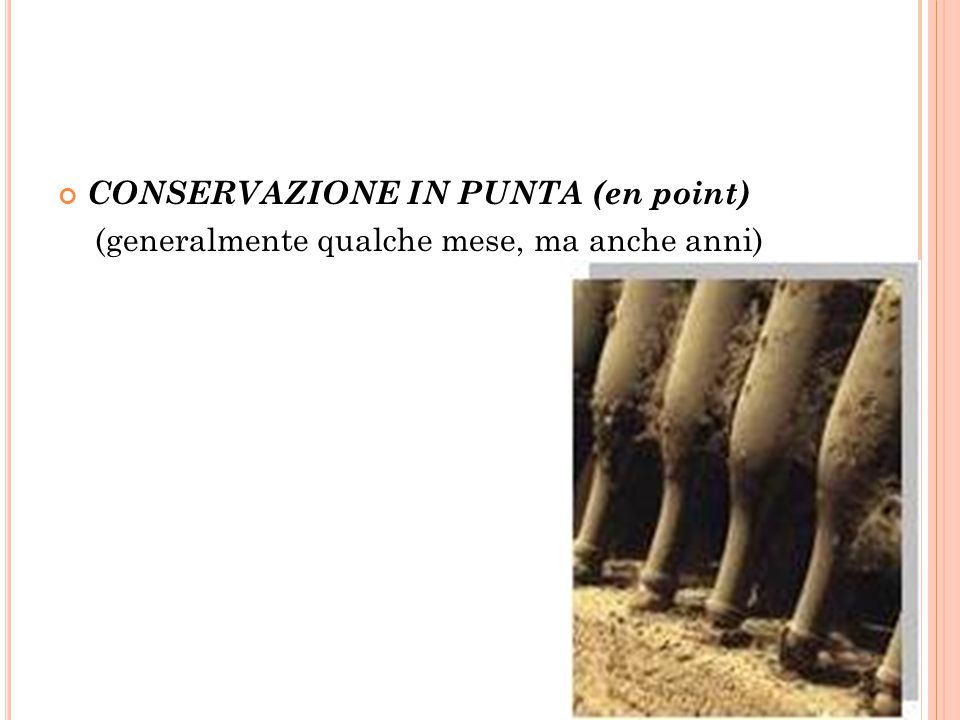 CONSERVAZIONE IN PUNTA (en point)