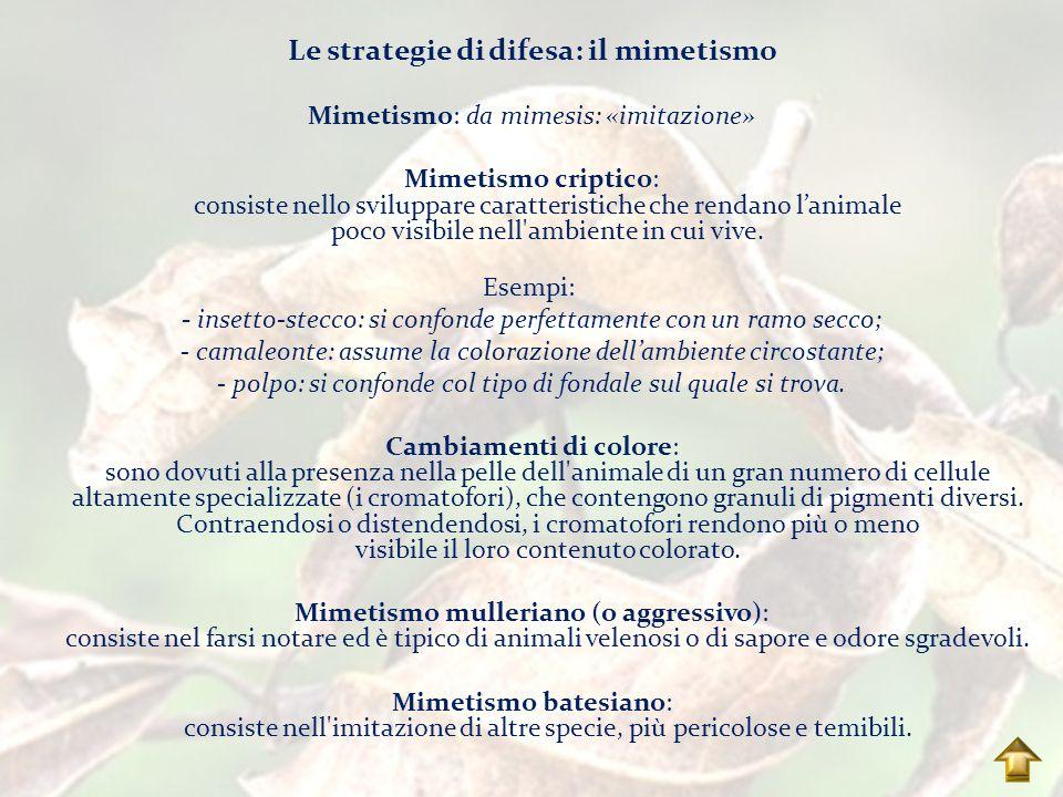 Le strategie di difesa: il mimetismo