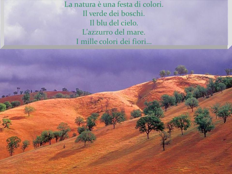 La natura è una festa di colori. Il verde dei boschi.
