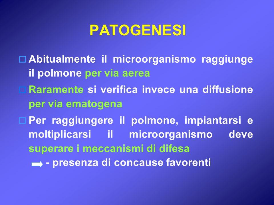 PATOGENESI Abitualmente il microorganismo raggiunge il polmone per via aerea. Raramente si verifica invece una diffusione per via ematogena.