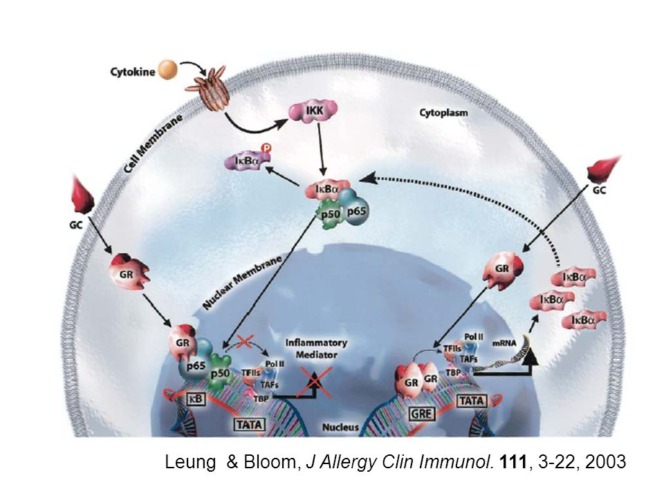 Leung & Bloom, J Allergy Clin Immunol. 111, 3-22, 2003