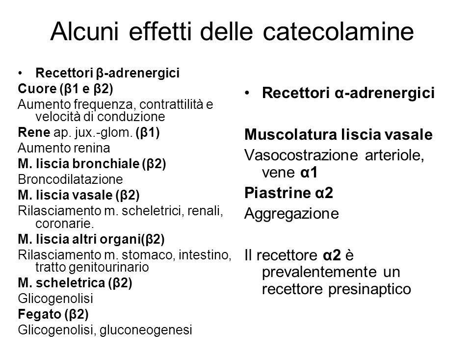 Alcuni effetti delle catecolamine