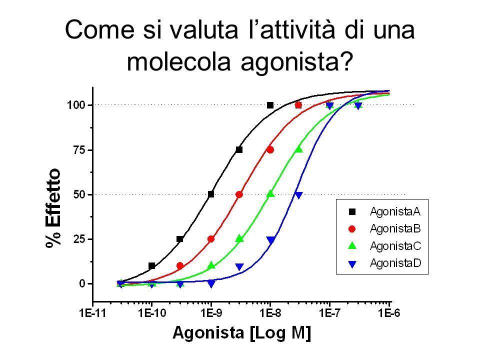 Come si valuta l'attività di una molecola agonista