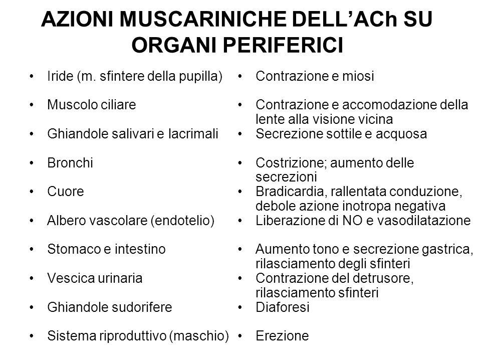 AZIONI MUSCARINICHE DELL'ACh SU ORGANI PERIFERICI