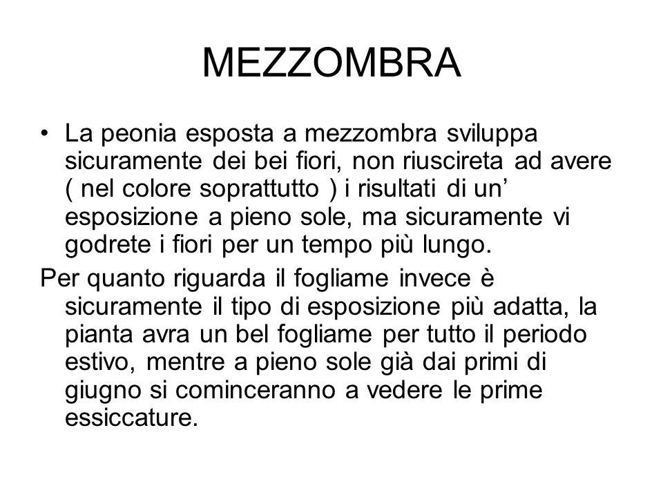 MEZZOMBRA