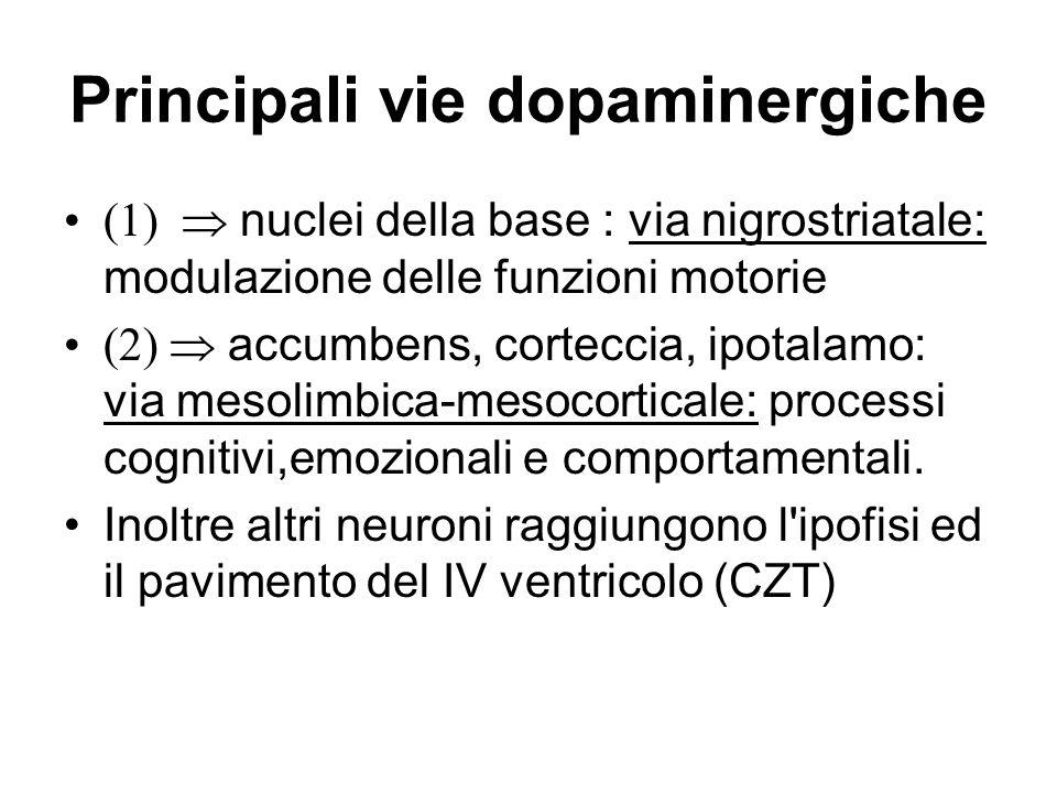 Principali vie dopaminergiche