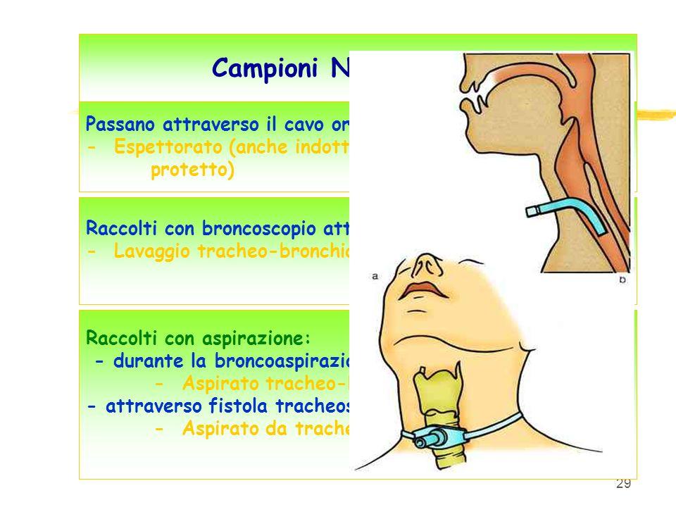 Campioni NON protetti Passano attraverso il cavo orale: - Espettorato (anche indotto, protetto)