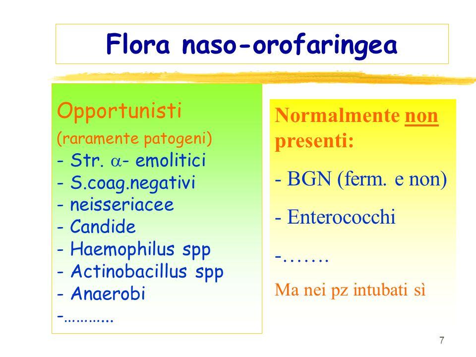 Flora naso-orofaringea