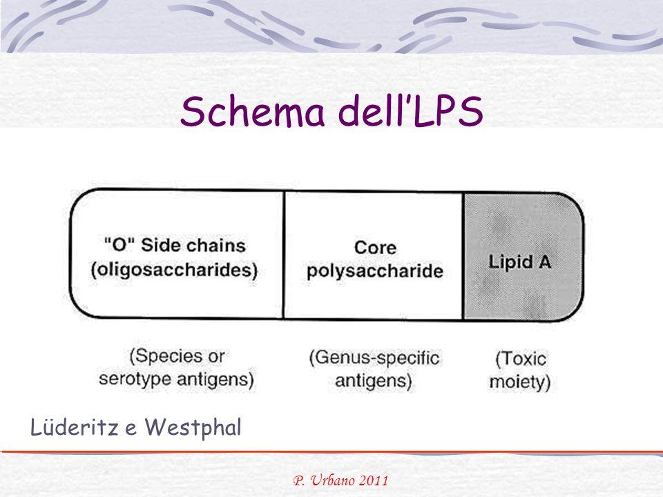 Schema dell'LPS Lüderitz e Westphal