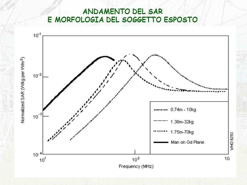 E MORFOLOGIA DEL SOGGETTO ESPOSTO