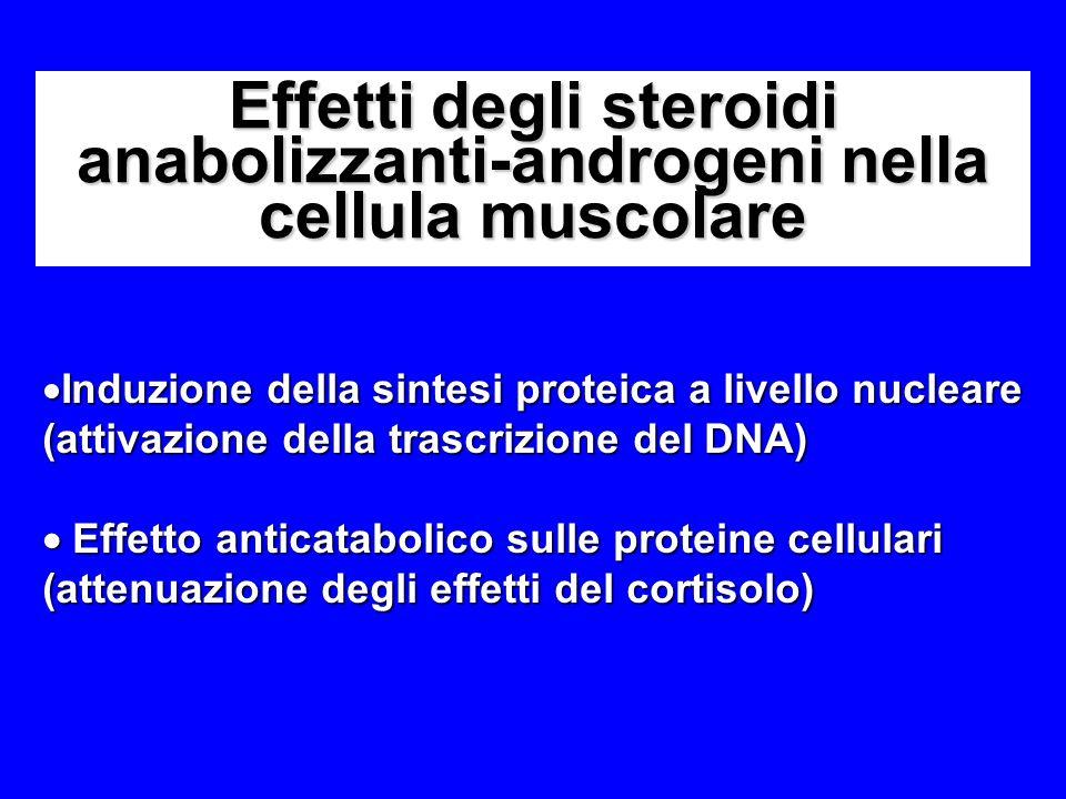 Effetti degli steroidi anabolizzanti-androgeni nella cellula muscolare