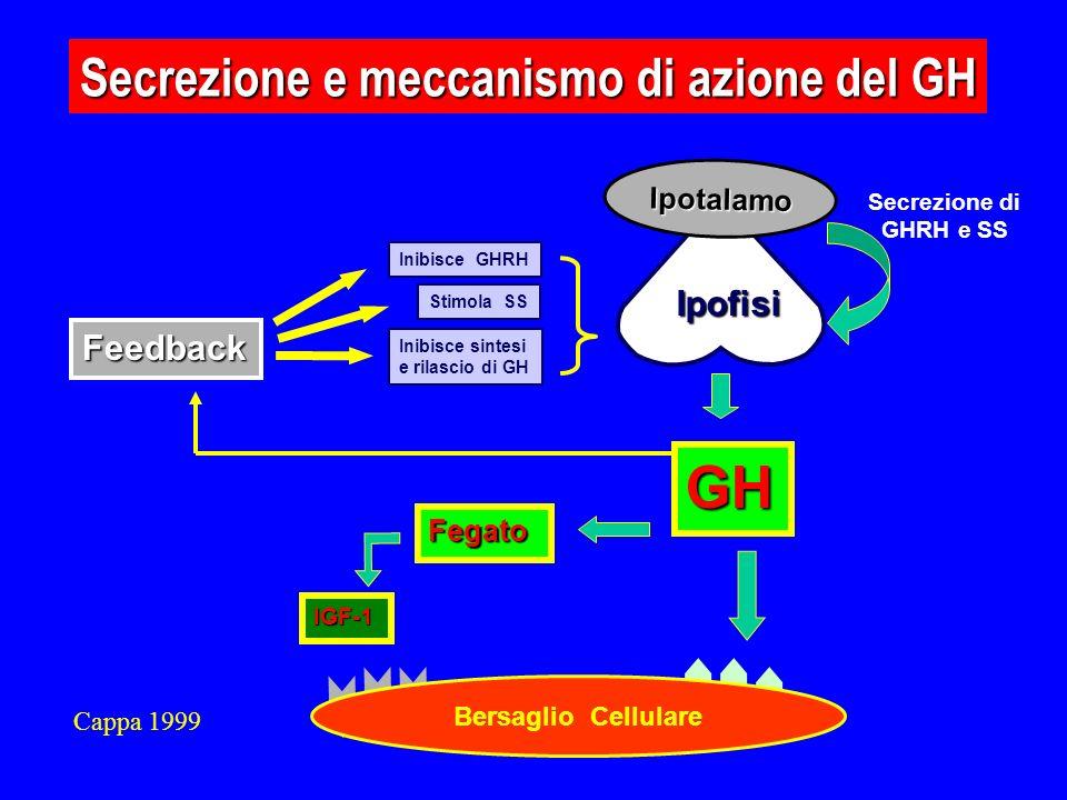 GH Secrezione e meccanismo di azione del GH Ipofisi Feedback Ipotalamo