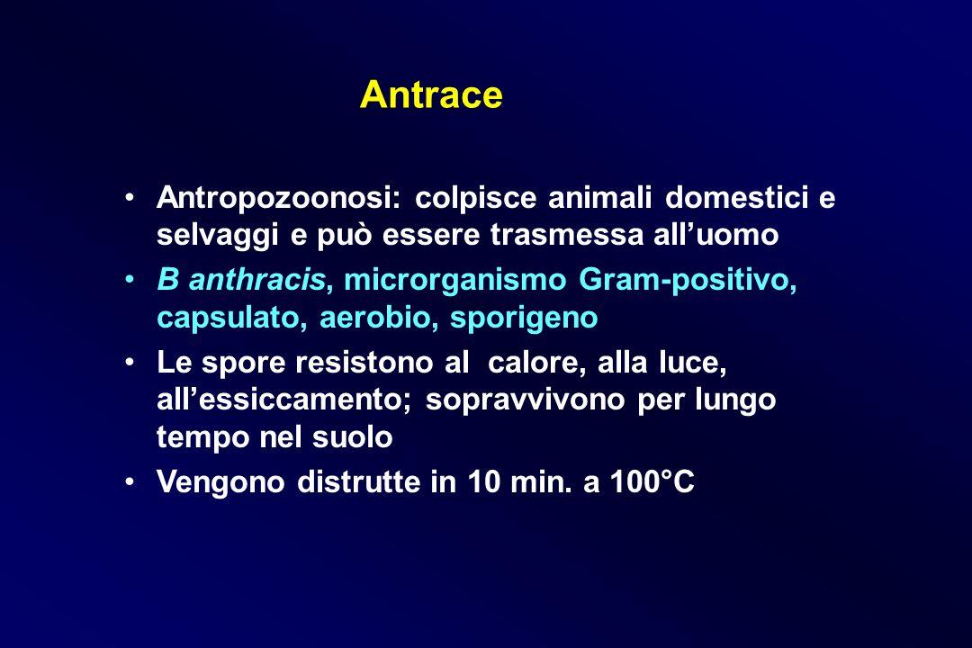 Antrace Antropozoonosi: colpisce animali domestici e selvaggi e può essere trasmessa all'uomo.