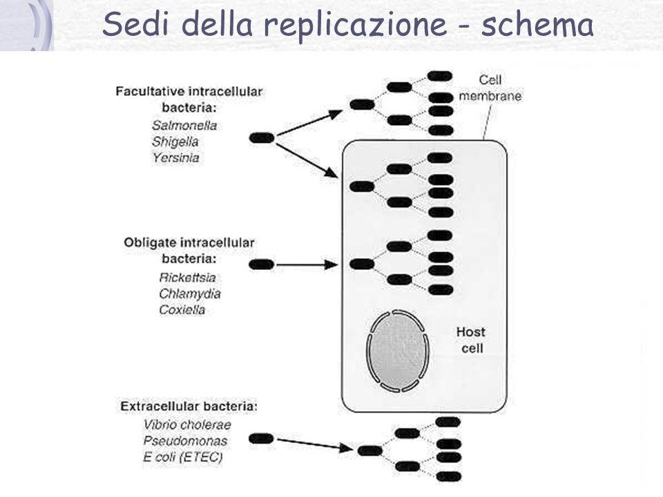 Sedi della replicazione - schema