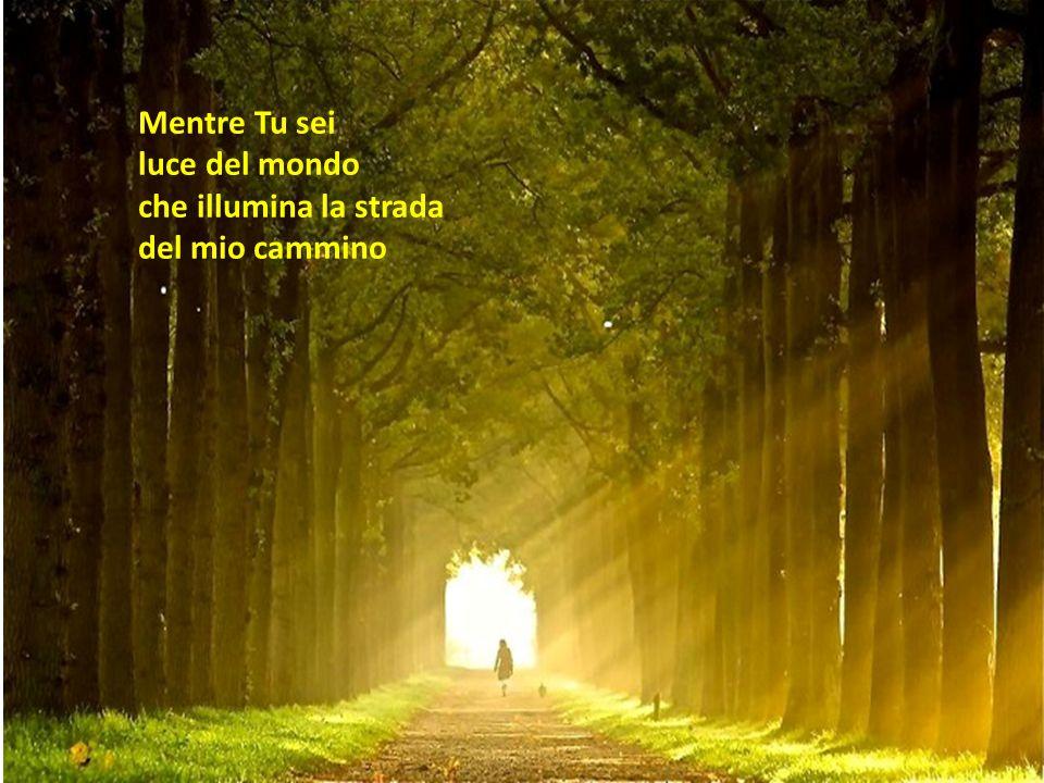 Mentre Tu sei luce del mondo che illumina la strada del mio cammino