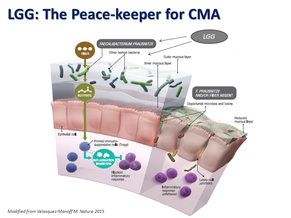 LGG: The Peace-keeper for CMA