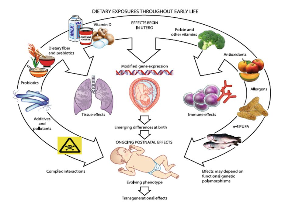 Epigenetic mechanisms elicited by nutrition in early life