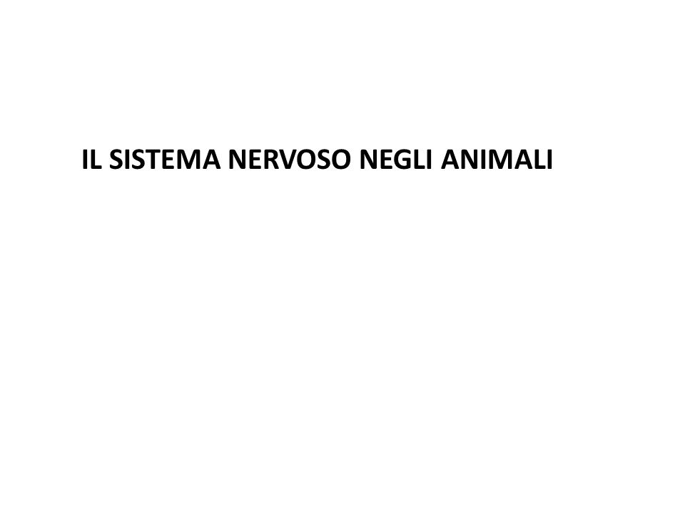 IL SISTEMA NERVOSO NEGLI ANIMALI