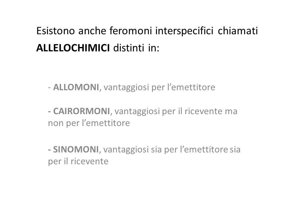 Esistono anche feromoni interspecifici chiamati ALLELOCHIMICI distinti in: