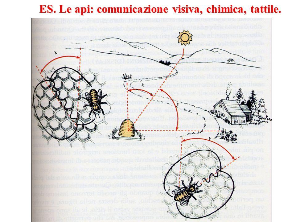ES. Le api: comunicazione visiva, chimica, tattile.