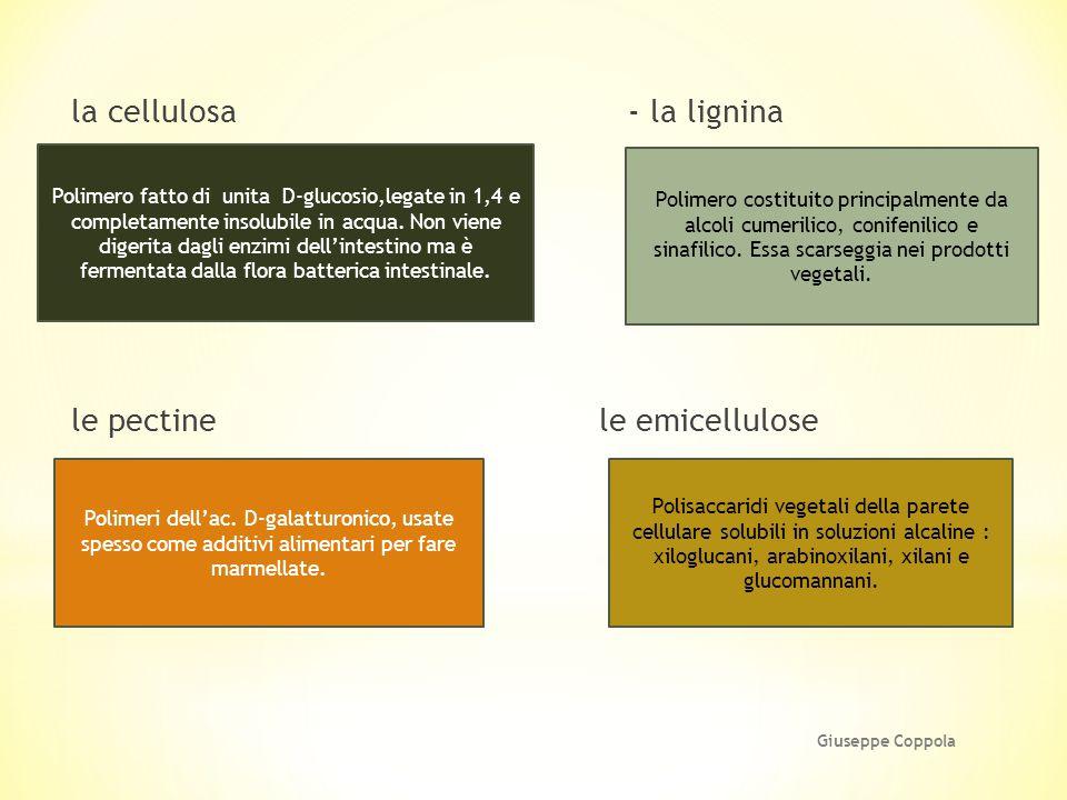 la cellulosa - la lignina