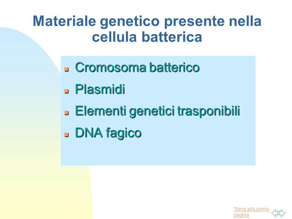 Materiale genetico presente nella cellula batterica