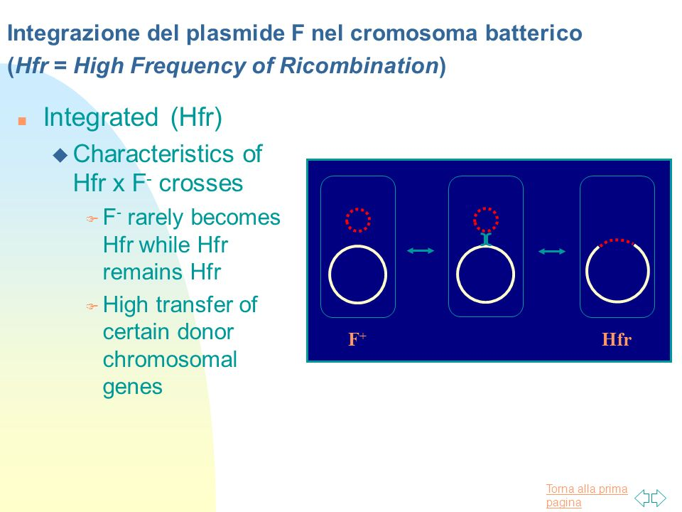 Integrated (Hfr) Characteristics of Hfr x F- crosses