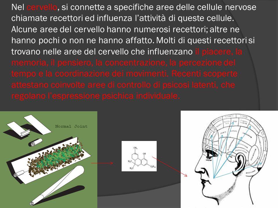 Nel cervello, si connette a specifiche aree delle cellule nervose chiamate recettori ed influenza l'attività di queste cellule.