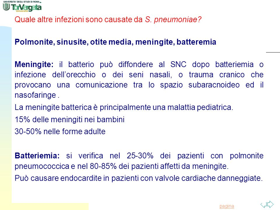 Quale altre infezioni sono causate da S. pneumoniae