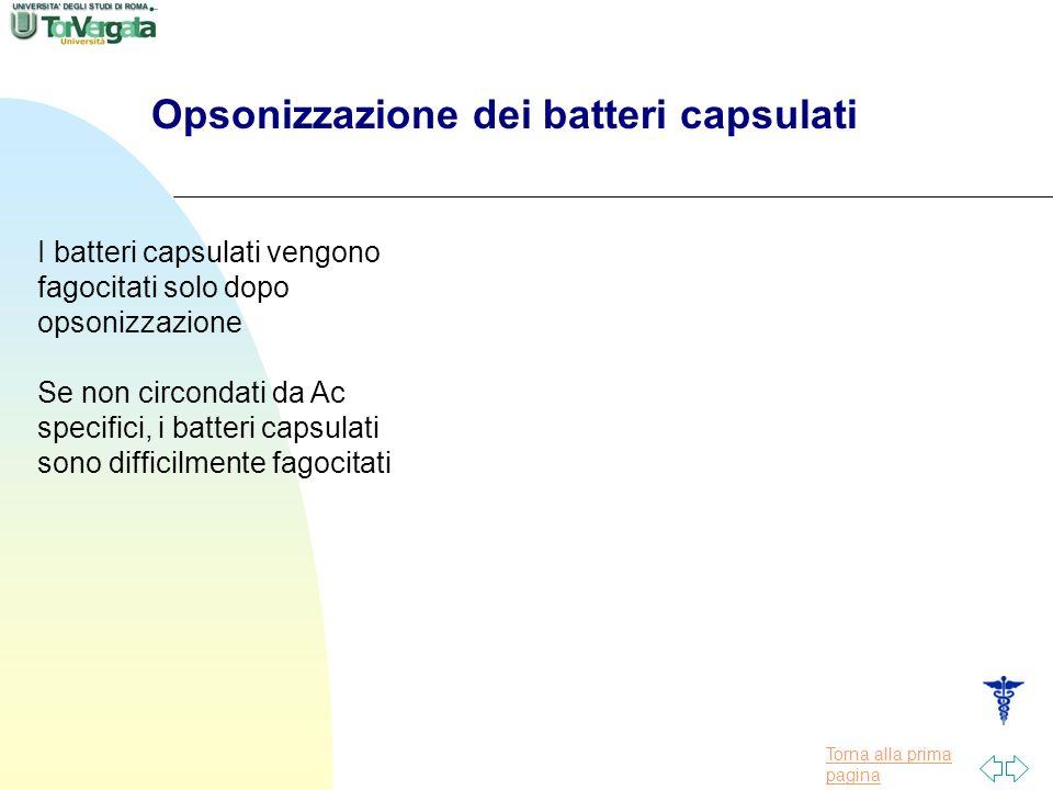 Opsonizzazione dei batteri capsulati