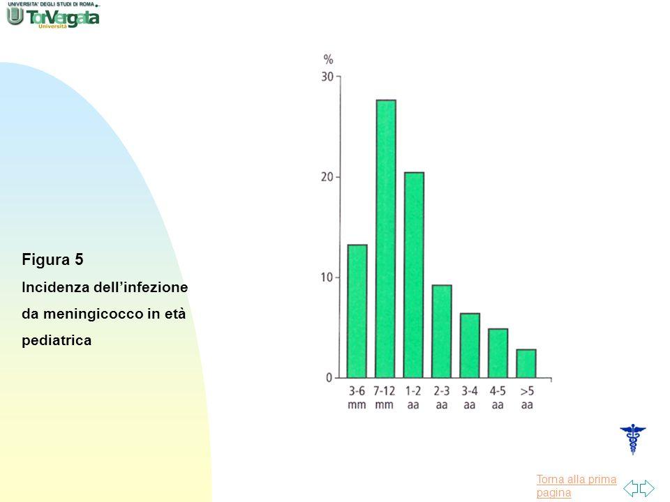 Figura 5 Incidenza dell'infezione da meningicocco in età pediatrica