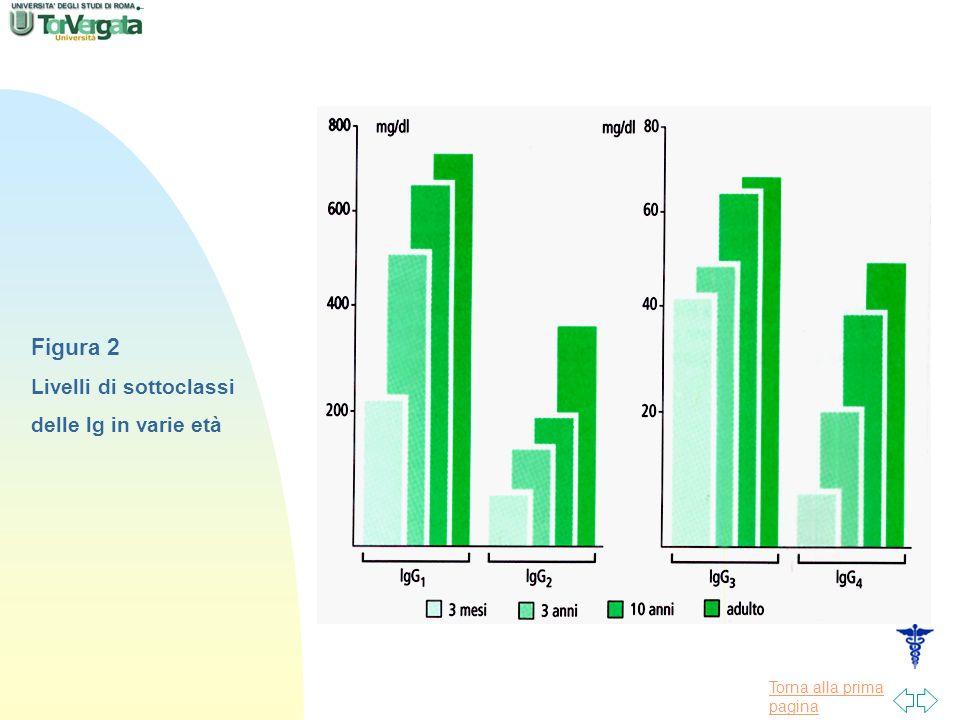 Figura 2 Livelli di sottoclassi delle lg in varie età