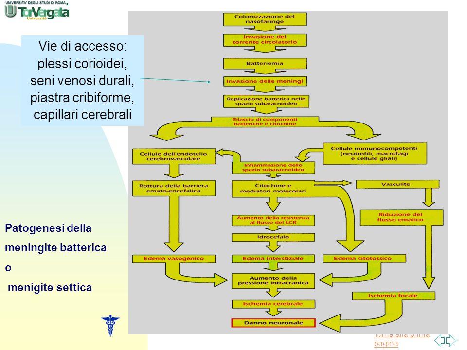Vie di accesso: plessi corioidei, seni venosi durali, piastra cribiforme, capillari cerebrali