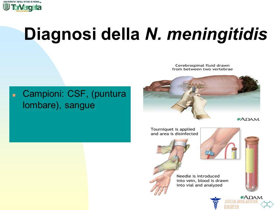 Diagnosi della N. meningitidis