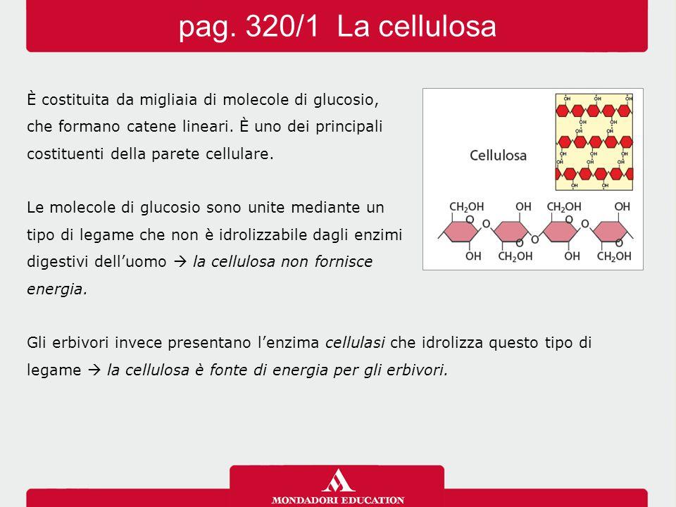 pag. 320/1 La cellulosa È costituita da migliaia di molecole di glucosio, che formano catene lineari. È uno dei principali.