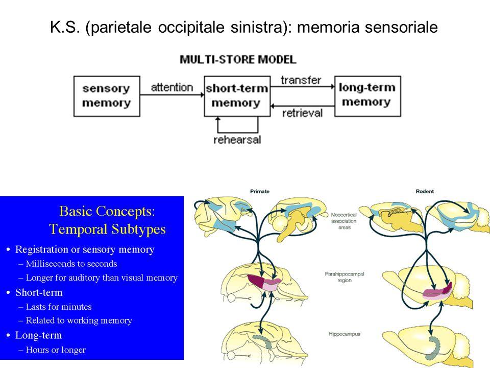K.S. (parietale occipitale sinistra): memoria sensoriale