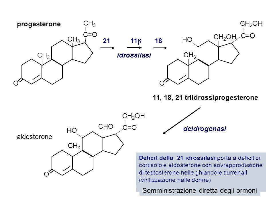 = = = progesterone C=O C=O CH2OH HO 21 11 18 CH3 idrossilasi CH3 O O