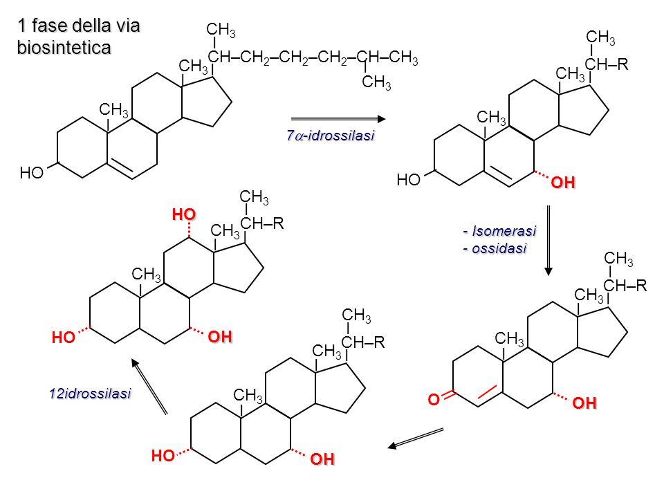 1 fase della via biosintetica