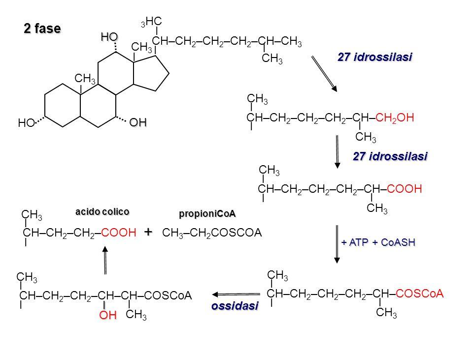 + 2 fase 3HC CH–CH2–CH2–CH2–CH–CH3 27 idrossilasi CH3 I I