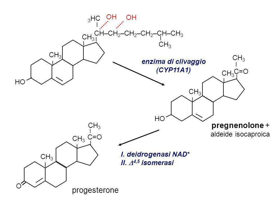 = pregnenolone + progesterone OH 3HC CH–CH2–CH2–CH2–CH–CH3 CH3